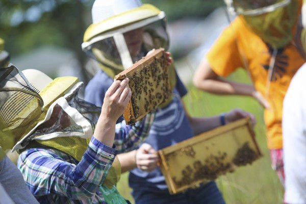 Goshen College re-certified as Bee Campus USA