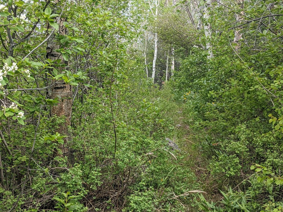 John Day Trail