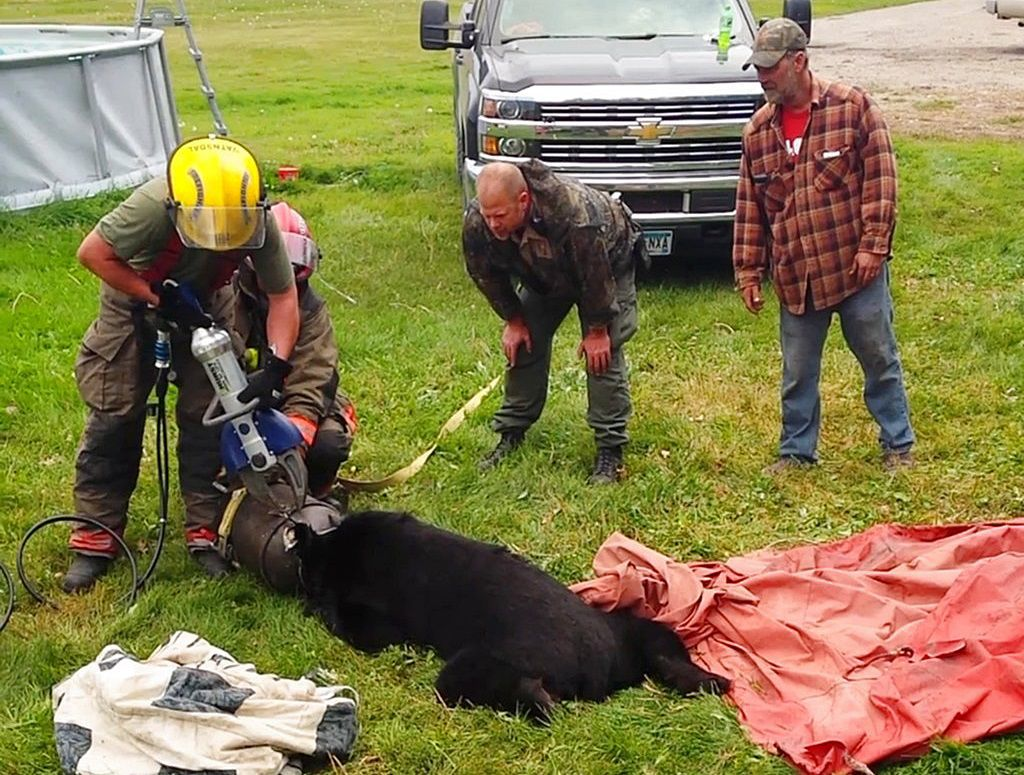 Bear Milk Can Rescue