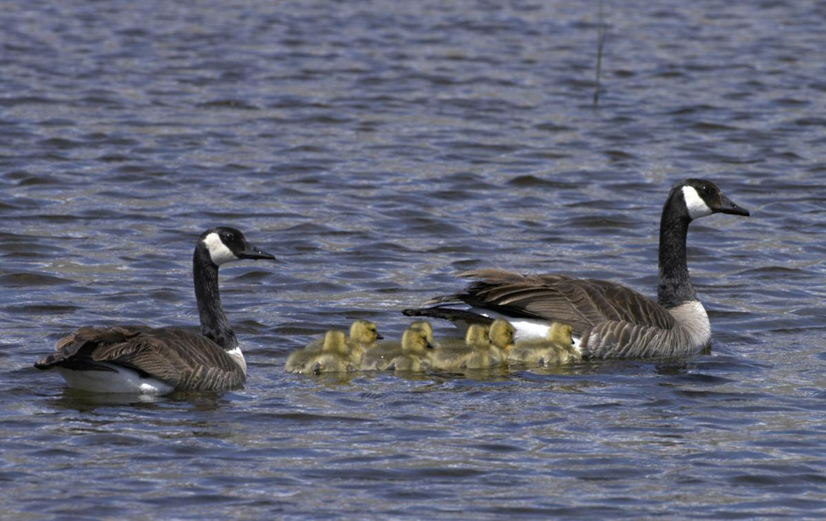 For the birds - Ruby Lake National Wildlife Refuge