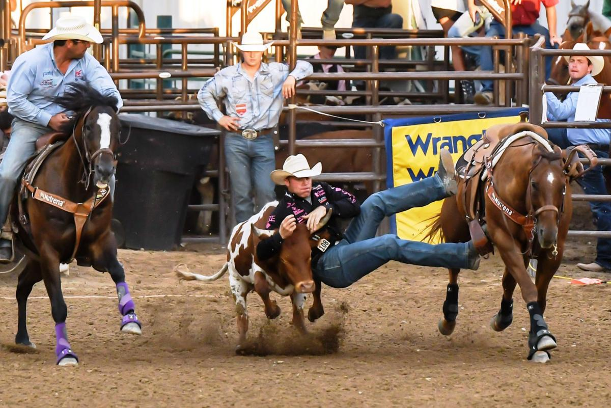 Dakota eldridge gets down from his horse rusty onto a steer during a 3 8 second run saturday night at the spanish fork fiesta days in utah