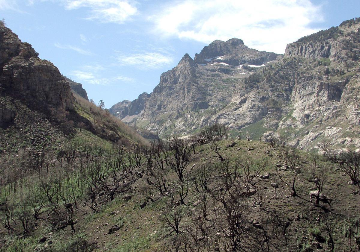 Lamoille Canyon