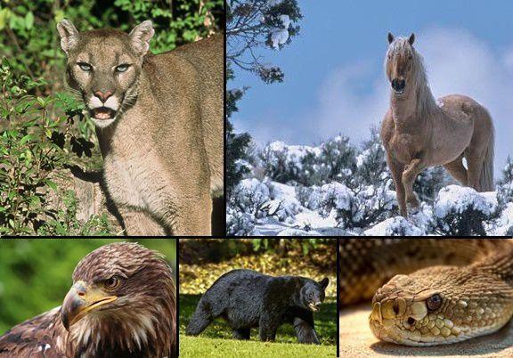 Wildlife dangers
