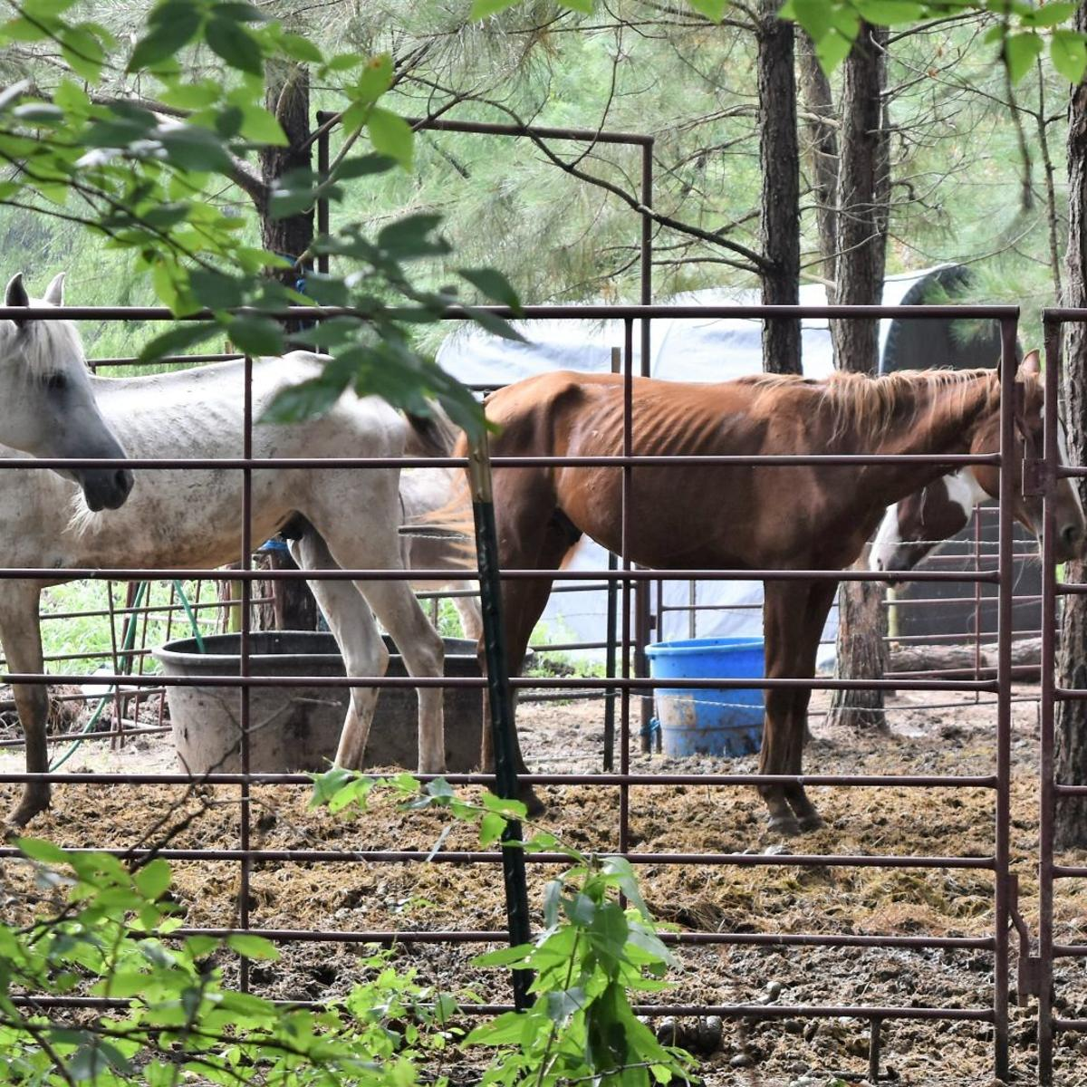 Horses seized from former Wells resident's rescue facility