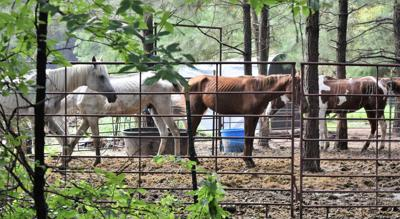 Horses seized from rescue facility