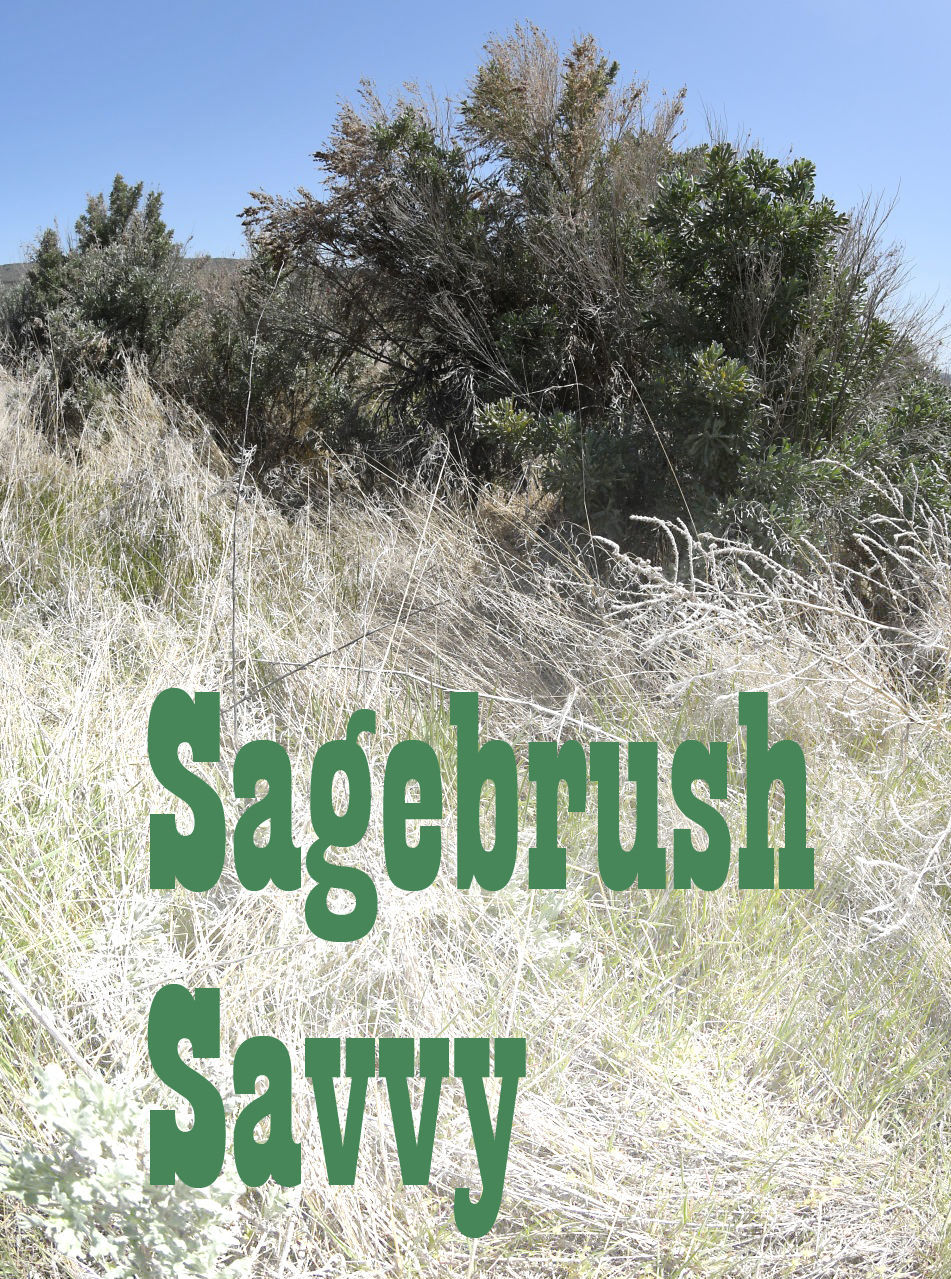 Sagebrush Savvy Facts About The Flower Lifestyles Elkodaily