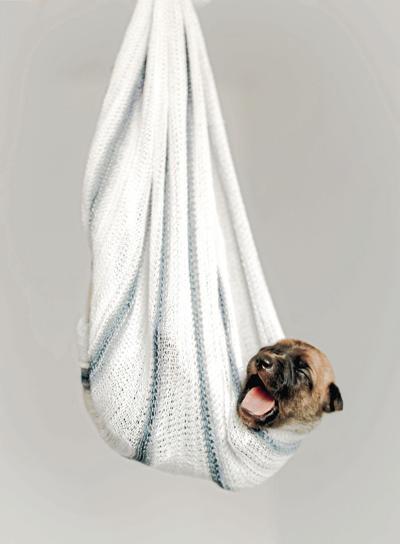 _brown-and-black-puppy-in-hammock-blanket-3198032_CMYK.jpg