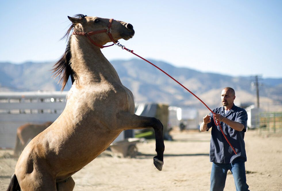 Film Review - The Mustang