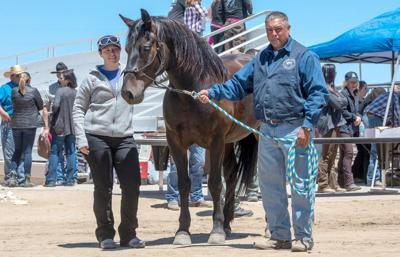 Saddle-trained horse auction