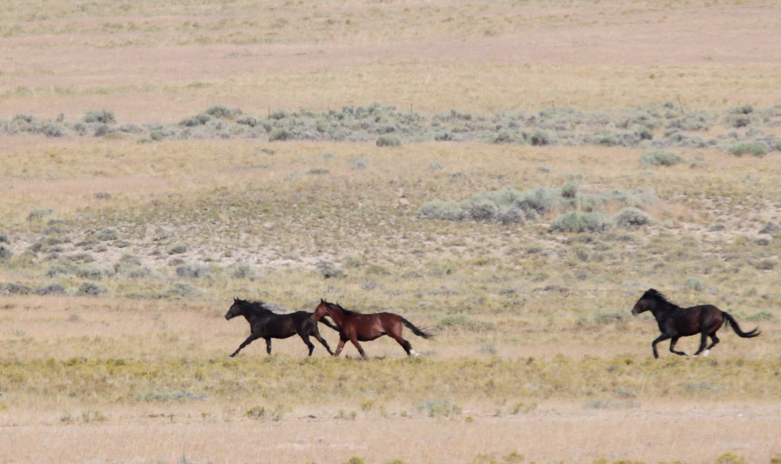 Nature Notes Wild Horse Population Update Local Elkodaily Com