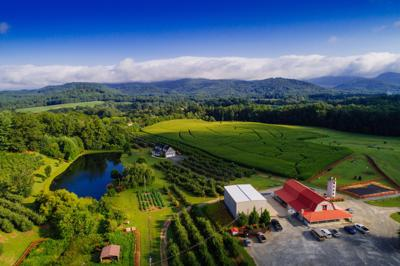 An Appalachian Eden for apples in North Carolina's Henderson County