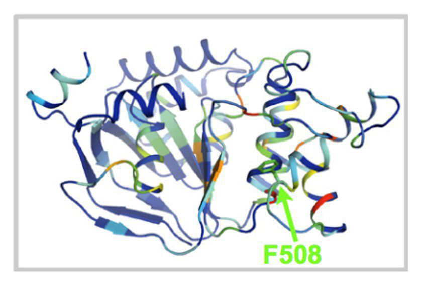 One domain of the CFTR protein