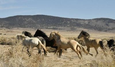 horse-03