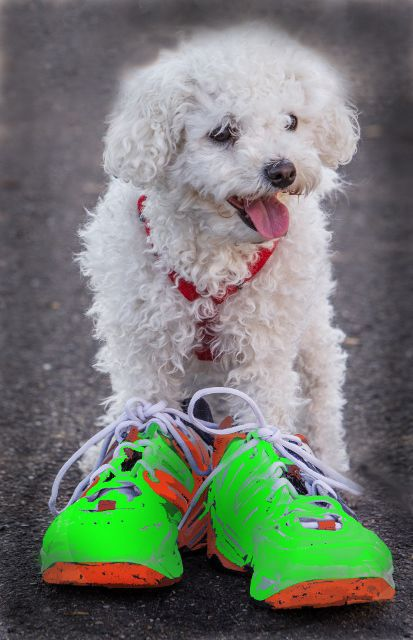 Puppy love 5k