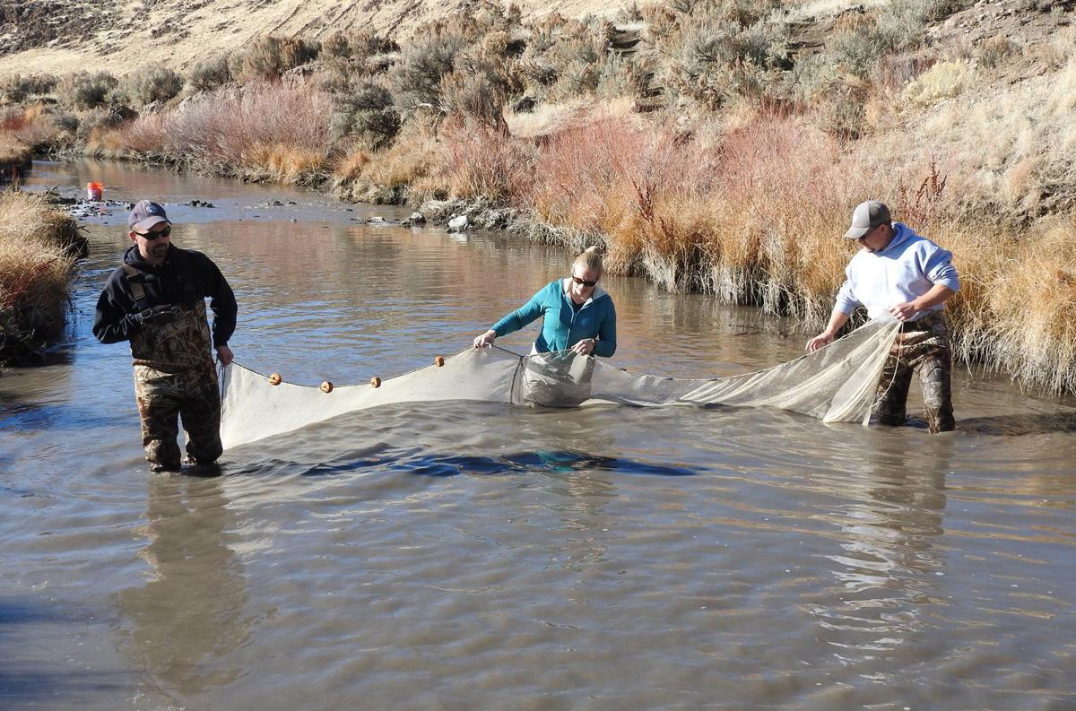 Fish rescued after dam breaks