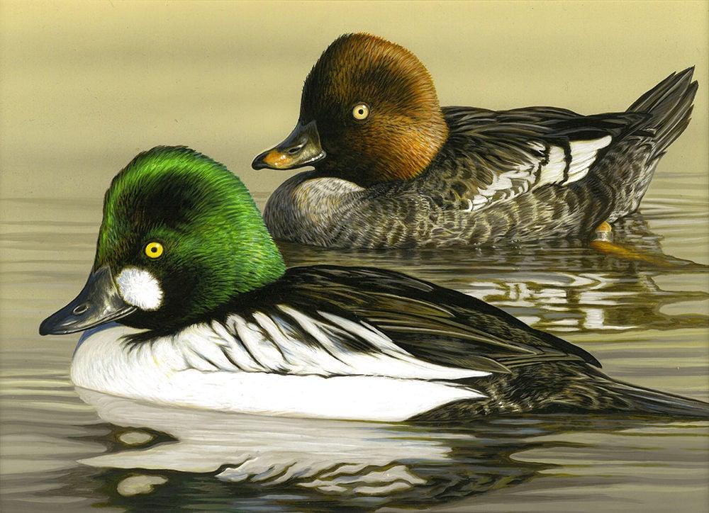 Duck stamp contest