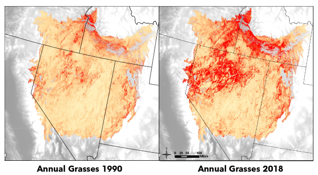 Great Basin annual grasses 1990 and 2018