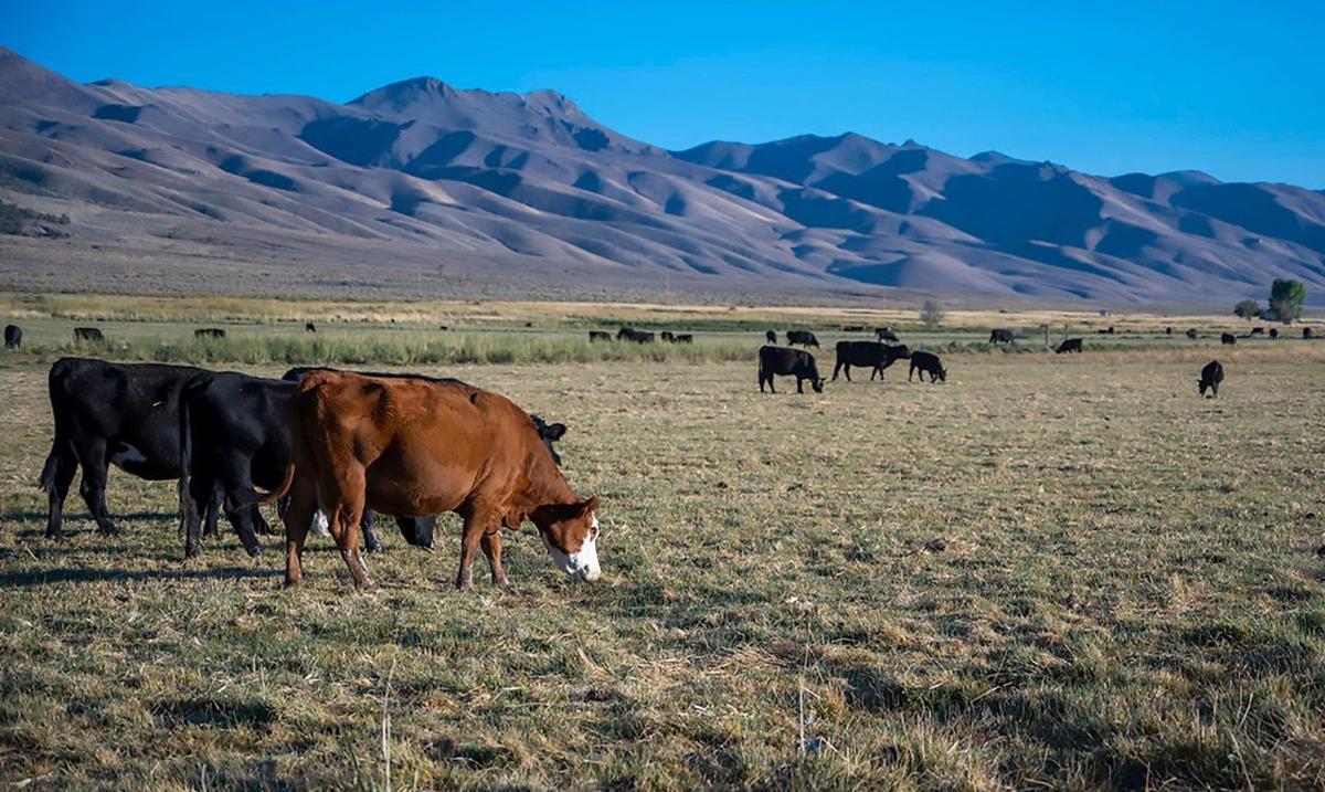 Nevada rangeland