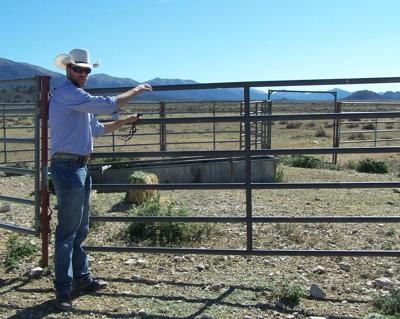 Wild horse project