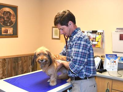 Elko Veterinary Clinic welcomes new doctor