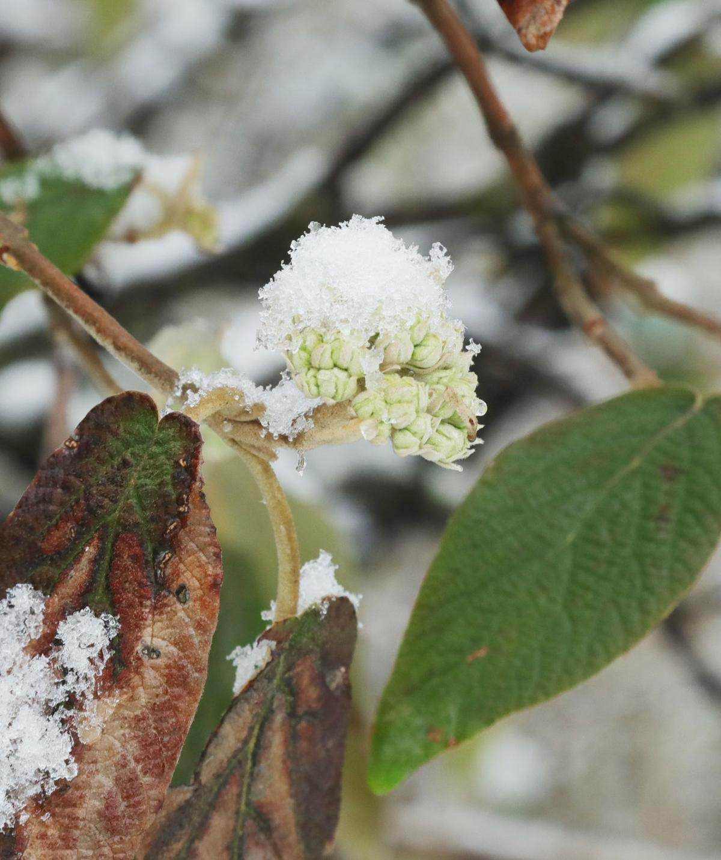 March snow 011.JPG