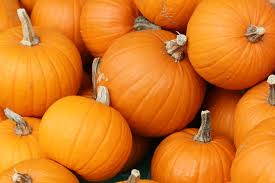 Pumpkin Contests Planned