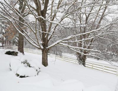 Snow January 2019057.JPG