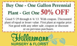 50% Off Perennial BOGO at Hillermann Nursery!