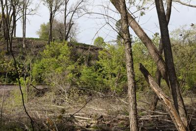 Cut Trees with a view of the Missouri River Runner