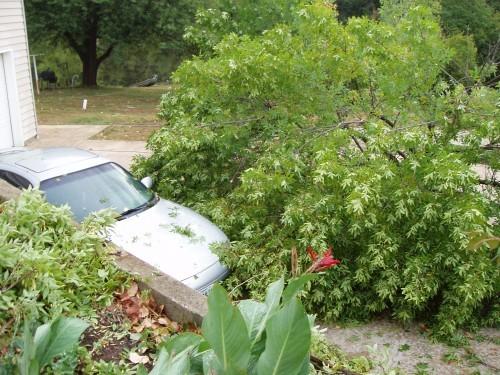 Krakow Storm Damage 1