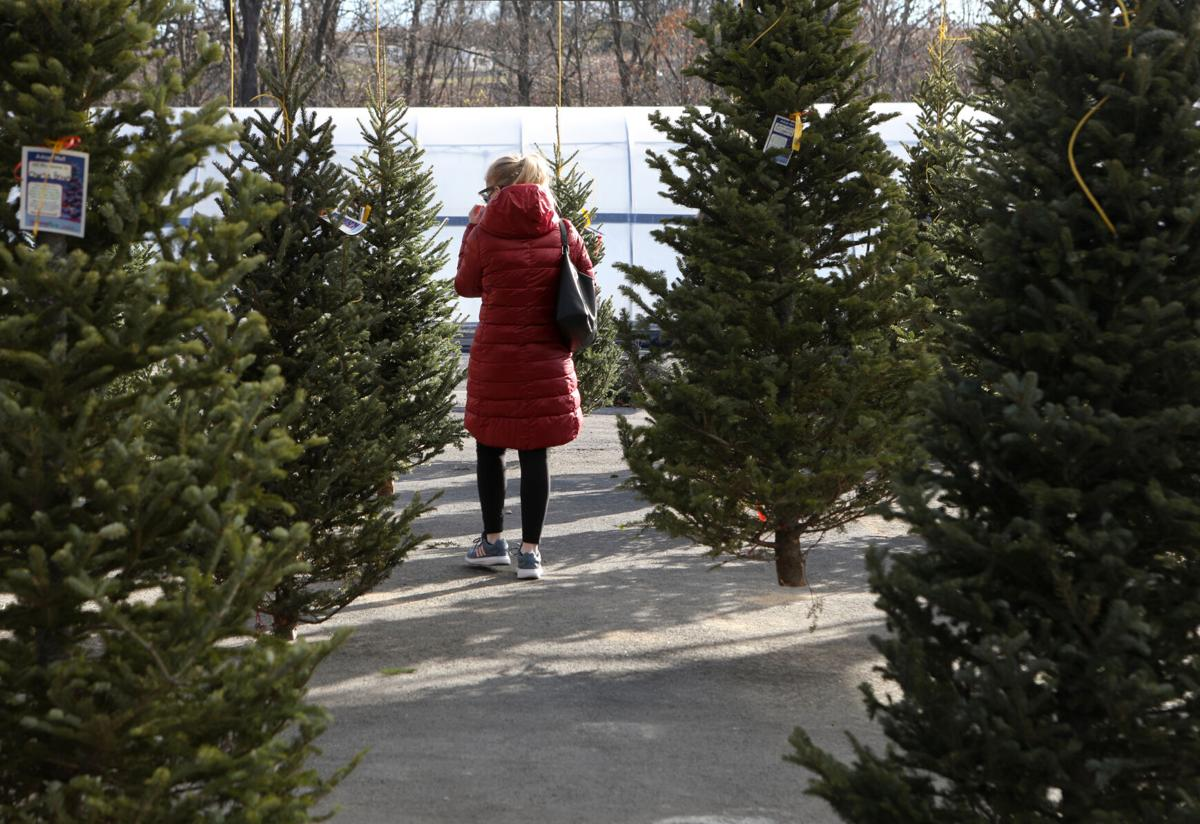 A woman searches for a Christmas tree