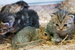 Squirrel and kittens
