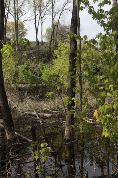 Riverfront Trail Trees Cut Down