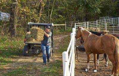 Longmeadow Rescue Ranch