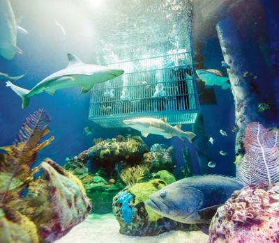Shark Dive at Wonders of Wildlife Aquarium
