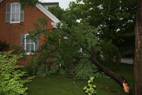 Tree on East State Street Home