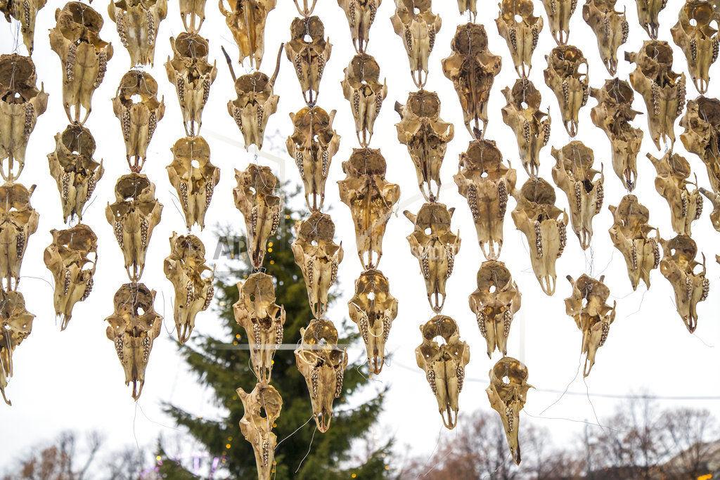 Norway Reindeer Skulls