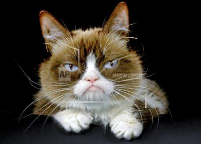 Grumpy Cat Death