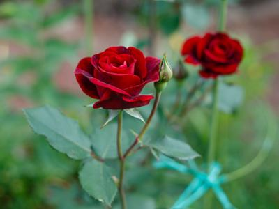 ONE GARDENER TO ANOTHER: Taking time to smell the roses