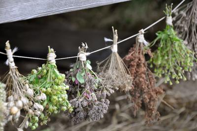 ONE GARDENER TO ANOTHER: Preserving home-grown herbs for later use