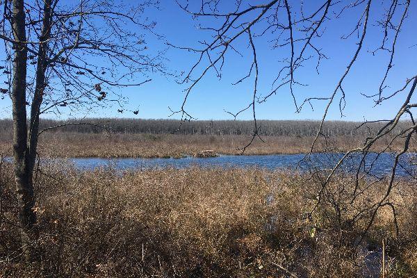 Beaverdam Swamp