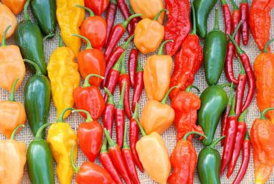 ONE GARDENER TO ANOTHER: Peppers bring the heat
