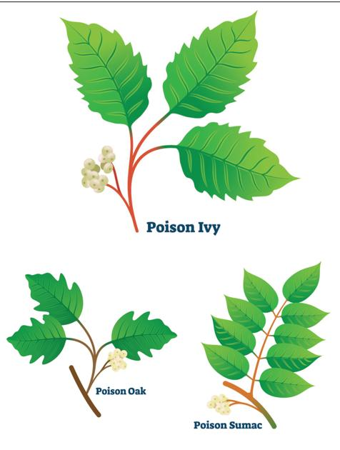 One Gardener To Another How To Identify And Treat Poison Ivy Oak And Sumac Lifestyles Enewscourier Com,Crib Tents Safe