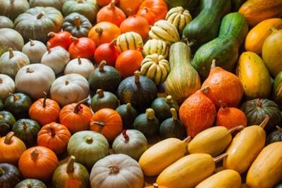 ONE GARDENER TO ANOTHER: Set the table for delicious and nutritious winter squash