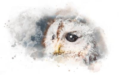 THE OWL'S EYE: Working together to make things happen