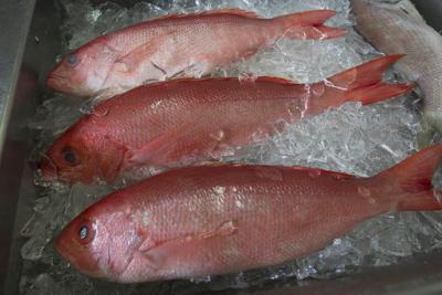Alabama's recreational red snapper season to end July 3