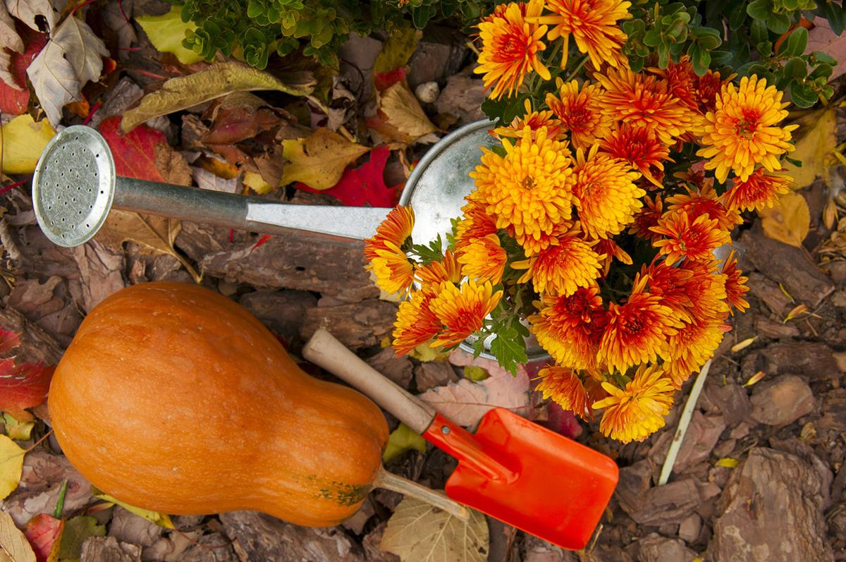 Beat blistering Alabama heat by planting fall garden | Lifestyles ...