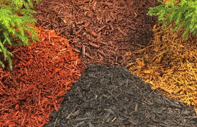 One Gardener To Another Winter Mulching Protects Plants Trees