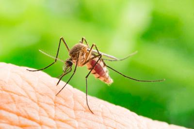 ONE GARDENER TO ANOTHER: Mosquitoes not welcome