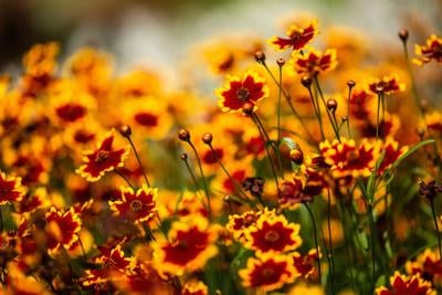 ONE GARDENER TO ANOTHER: Dividing spring and early summer blooming perennials in fall
